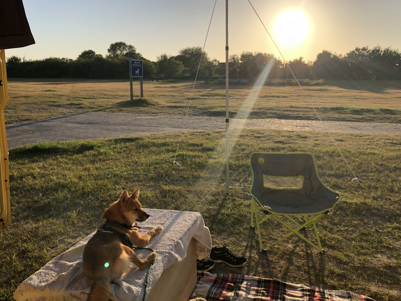 Shiba Inu vor Sonnenuntergang