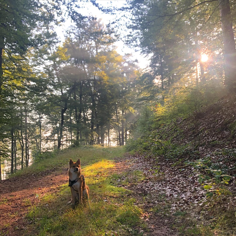 Kaito im Wald