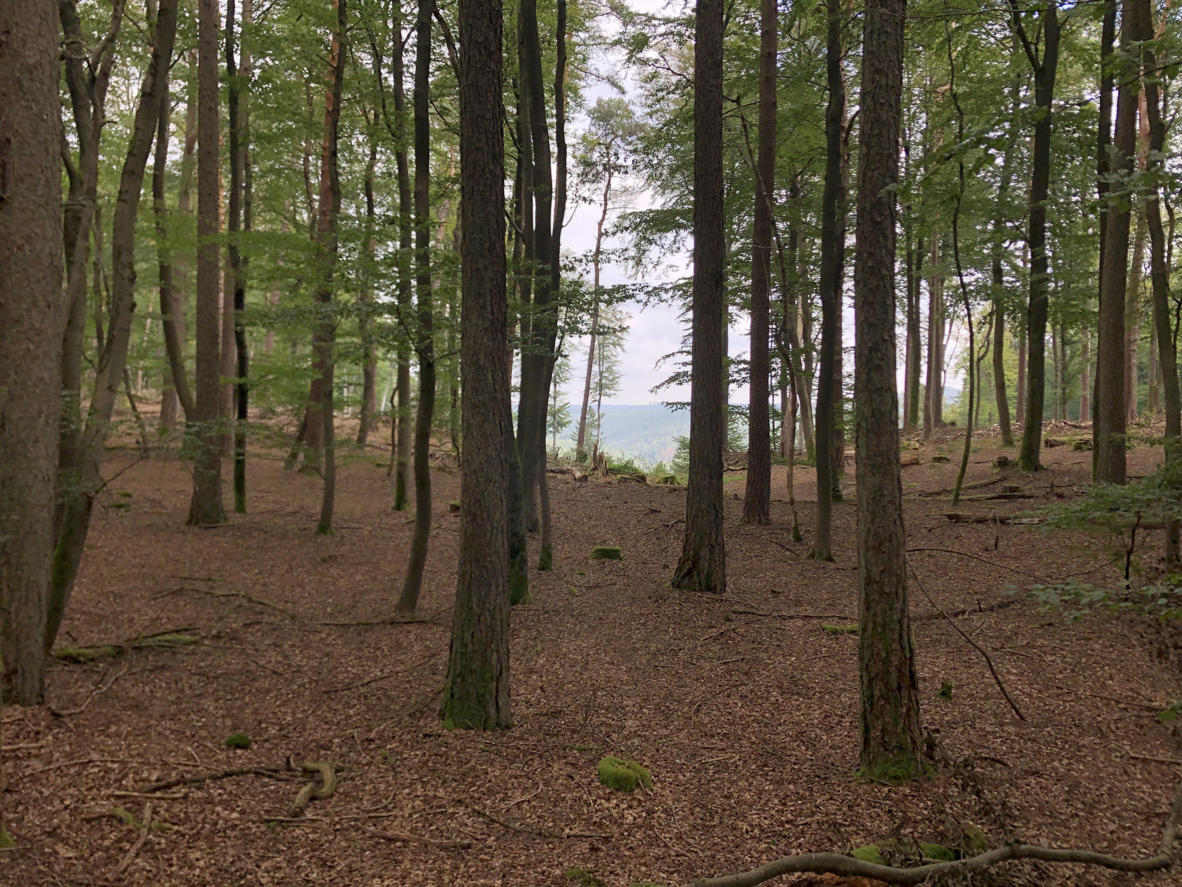 Ausblick durch die Bäume